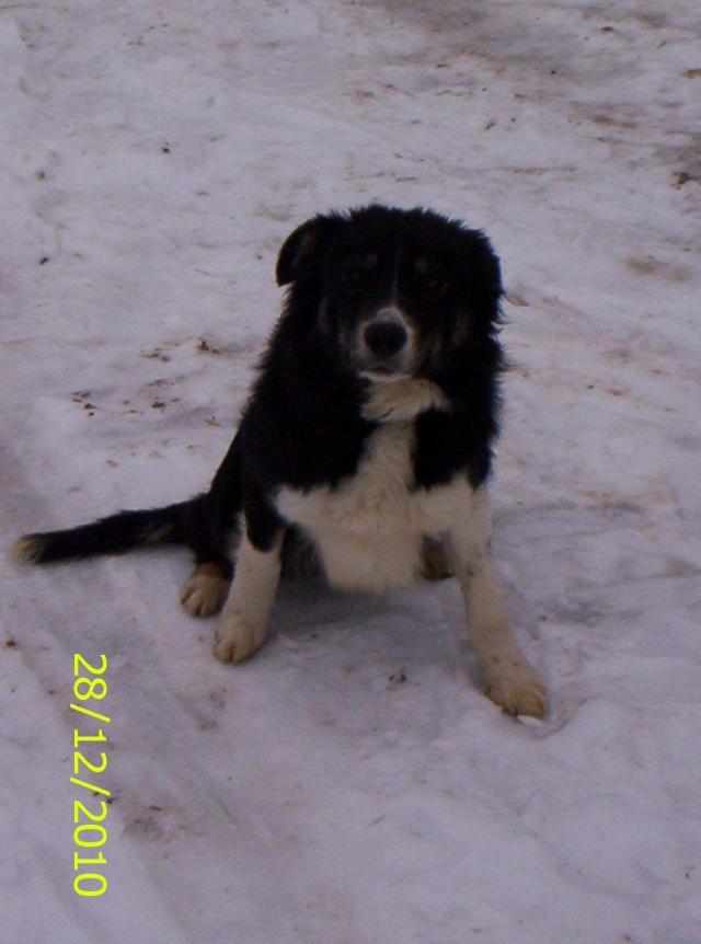 Quelqu'un a-t-il des chiens issus du Mont Kerchouan? Photo-180-23ee5db