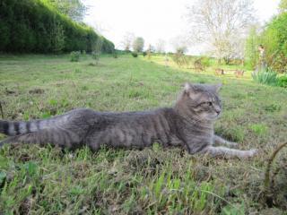 Spider chat tigré gris mâle FIV+ de 08/2005 - dpt 56 Img_1004-278e62b
